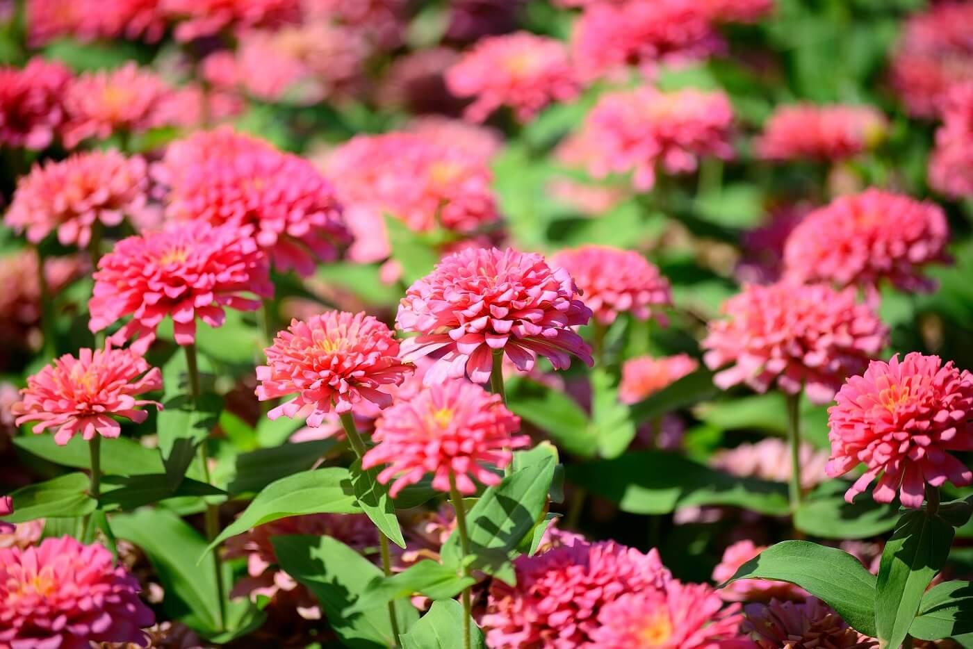 Grow Your Own Cut Flower Garden