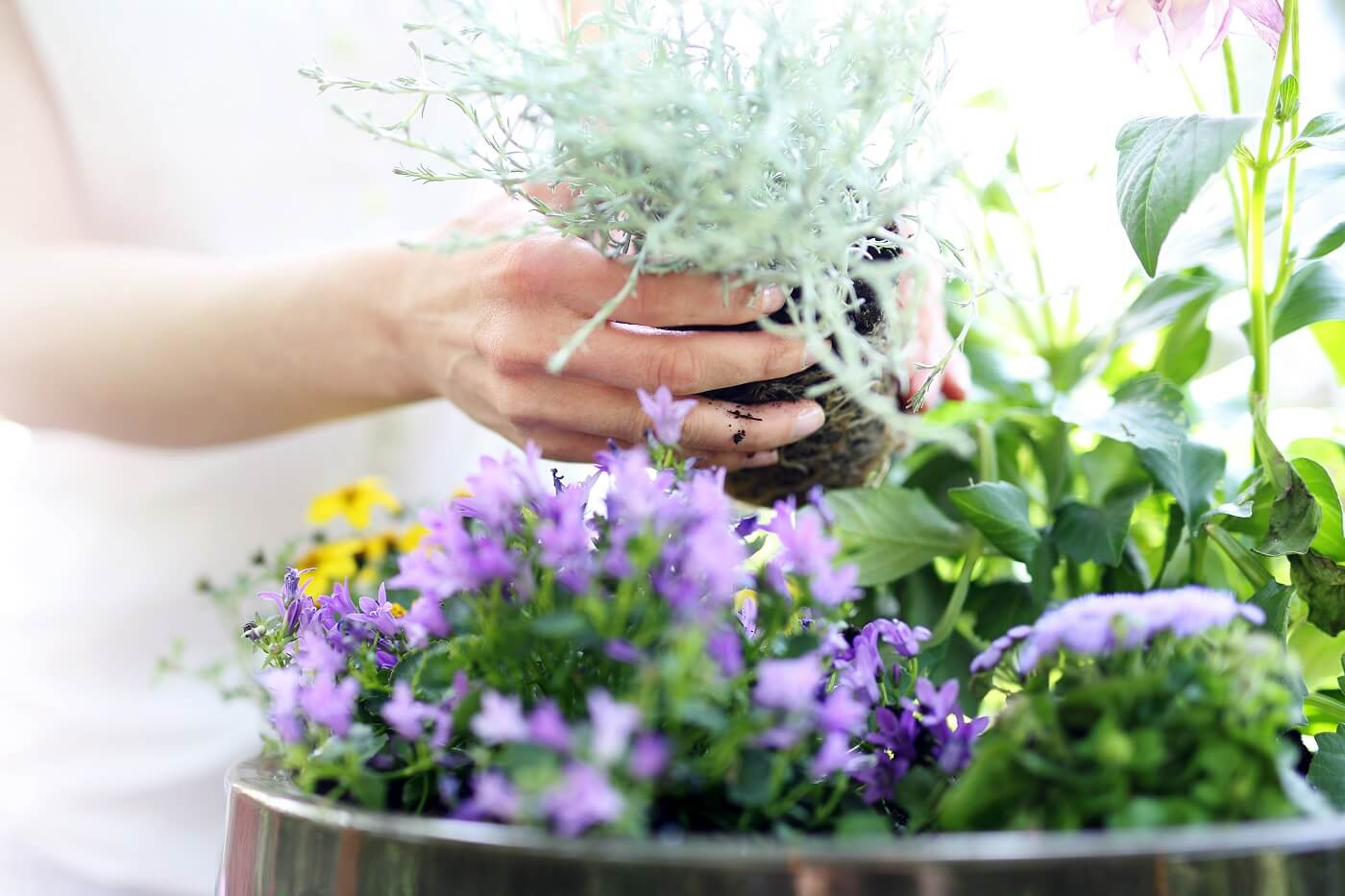 Grow Your Own Potted Flower Garden