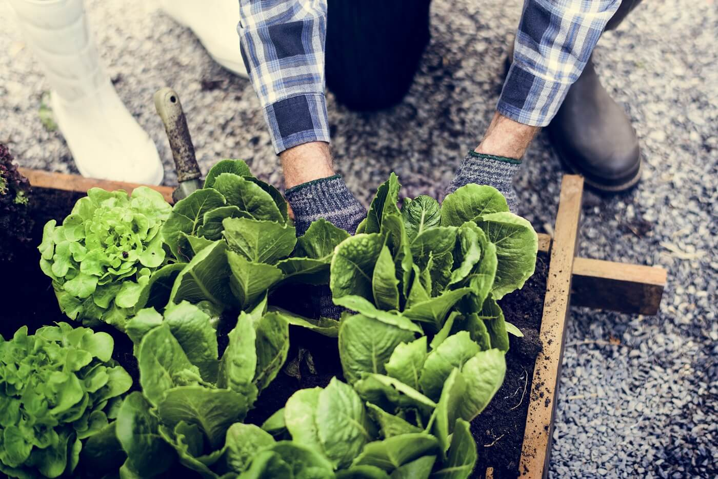 Grow Your Own Small Space Veg Patch!